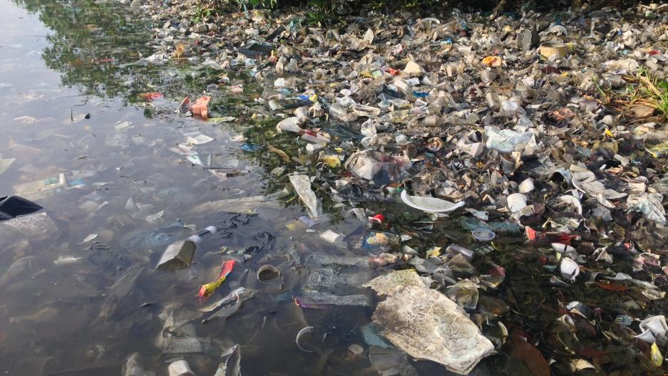 Cup Island trash